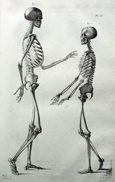 New tattoo ideas vintage medical 46 Ideas Anatomy Drawing, Anatomy Art, Human Anatomy, Skeleton Drawings, Skeleton Art, Anatomy Reference, Art Reference, Anatomy Bones, Skeleton Anatomy