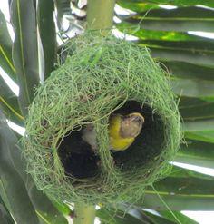 Bird Nest - Kerala