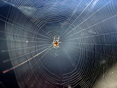 WOLFGANG KUMM/AFP/Getty Images   by Nate Church31 Aug 20170 				31 Aug, 201731 Aug, 2017  Researchers in the United Kingdom and Italy have developed a method that causes spiders to produce silk that is five times stronger than its already legendary toughness. Spider silk is already...