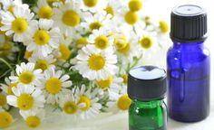 Popularmente consumida como chá calmante, as flores da camomila também rendem um óleo essencial com propriedades interessantes para cuidar da saúde do corpo. Além disso, o óleo essencial de camomila é está entre os mais utilizados na aromaterapia como tratamento antidepressivo, calmante e relaxante.Leia também