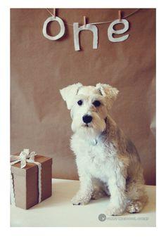 dog birthday!!