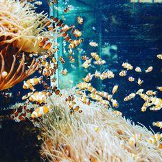 #Rocher Gdzie jest nemo? #tbt#Monaco#aquarium#fish#amphiprion#vscocam#vsco by bronxbronx from #Montecarlo #Monaco