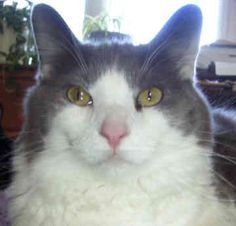 All+Mixed+Cat+Breeds | Mixed Breed Cats - 530 - by Kayla