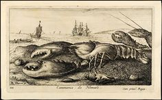 FLAMEN, Aalbert (Flamand) (1648-74) / Salt Water Fish, Part I (Poissons de Mer) [#03 of 12] -- The LOBSTER (Cammarus, Le Homard) / etching + engraving