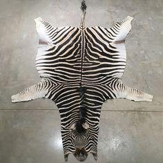 Zebra Rug – The Tiny Finch