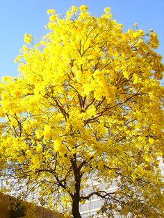 a coisa mais amarela do mundo