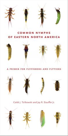 COMMON NYMPHS OF EASTERN NORTH AMERICA: A Primer for Flyfishers and Flytiers | By Caleb J. Tzilkowski and Jay R. Stauffer Jr. | http://www.psupress.org/books/titles/978-0-271-20450-5.html
