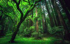 amazon-rainforest-green-wallpapers.jpg