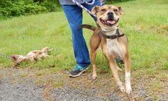 Dickson County Animal Control, Dickson TN (May 2, 2016) Last Chance Pet Rescue - 615-797-9716, lastchancepetrescue-dickson@yahoo.com