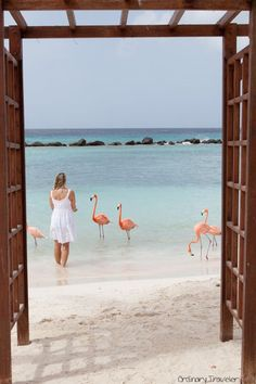 Feeding flamingos! One of the top 10 things to do in Aruba.