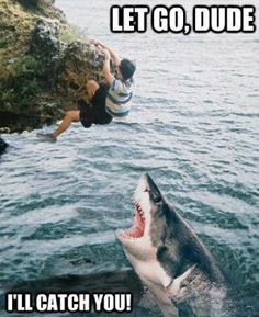 Let's Feed Fat People to the Sharks and the Real Odds of a Shark ...