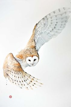 Karl Martens, Barn Owl | Cricket Fine Art