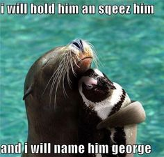 #1 I say this all the time #2 I want a penguin and I would hug and squeeze him and name him George!!!!