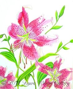 Stargazer Lily  Original Drawing in Pen and by LauraWilsonGallery, $850.00