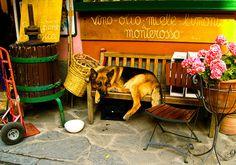 Italien-Dog by Rob Perkins - 089DJ, via Flickr