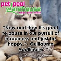 """""""Now and then it's good to pause in our pursuit of happiness and just be happy.""""- Guillaume Apollinaire #Sunday #quotes"""