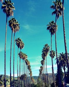 Palm Trees in Los Angeles, California, Palm Tree Lined Street Photo Print. California Photography. Los Angeles Photography. LA Photo. LA Art