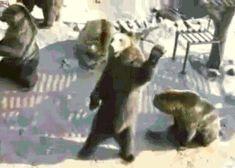 En el Zoo de Guasave los osos te gritan a ti..