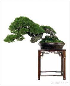 盆景pén jǐng
