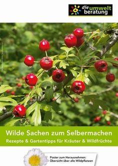 """Wilde Sachen zum Selbermachen  Rezepte & Gartentipps für Kräuter & Wildfrüchte Cover © """"die umweltberatung""""      Broschüre     € 4,50 zzgl. Versandkosten      HerausgeberIn: """"die umweltberatung"""" Österreich"""