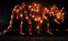 Amazing Pumpkin Arrangements at the Great Jack O'Lantern Blaze! Click through to see more!