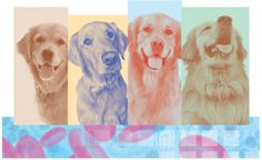 Large-Scale Cancer Study of Golden Retrievers Holds Hope For All Dogs | The Bark