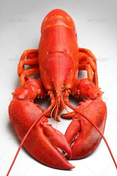 Realistic Graphic DOWNLOAD (.ai, .psd) :: http://hardcast.de/pinterest-itmid-1007097001i.html ... Red Lobster ... One Animal, Prepared Crustacean, Prepared Shellfish, cooked, crustacean, food, lobster, no people, red ... Realistic Photo Graphic Print Obejct Business Web Elements Illustration Design Templates ... DOWNLOAD :: http://hardcast.de/pinterest-itmid-1007097001i.html