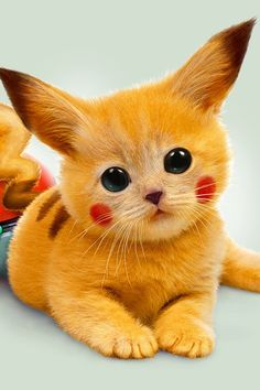 Pokemon Pikachu as a cat. Pokemon Go, Pikachu Pikachu, Pokemon Memes, Animals And Pets, Baby Animals, Cute Animals, I Love Cats, Cute Cats, Cute Pokemon Wallpaper