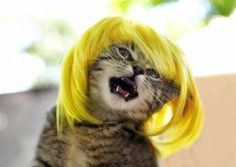 """PAT YOUR WEAVES KITTEHS, PAT PAT YOUR WEAVES."" 
