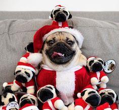 If All You Want To Do This Winter Is Be In A Mood, Doug The Pug Is Your Spirit Animal Wenn alles, was Sie in diesem Winter tun möchten, Stimmung ist, ist Doug der Mops Ihr Geistestier Cute Little Animals, Cute Funny Animals, Funny Dogs, Cute Pugs, Cute Dogs And Puppies, Bulldog Puppies, Black Pug Puppies, Terrier Puppies, Lab Puppies