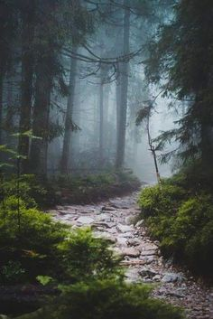beautiful landscapes Fascinating Photographs of Forest Paths to another world Landscape Photography, Nature Photography, Photography Tips, Digital Photography, Lightning Photography, Photography Lighting, Portrait Photography, Wedding Photography, Beautiful Places