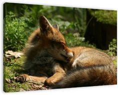 Een vos , rustend op een open plek in het bos