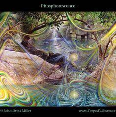 """Phosphorescence"" By Adam Scott Miller"