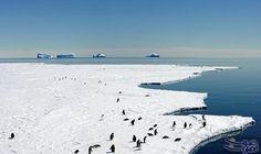 بناء ملاذ بحري ضخم في القارة القطبية الجنوبية الاثنين: بدأت استراليا وفرنسا الاثنين، دفعة جديدة لخلق ملاذ بحري ضخم في شرق القارة القطبية…