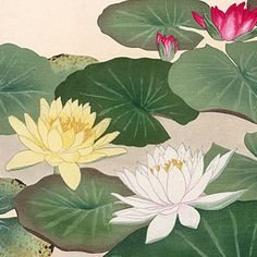 Water lily; Flowers of Japan; a 1900 Japanese Woodblock print by Chigusa Soun. #japanese #flower #garden #botanical #woodblock #kyoto #art