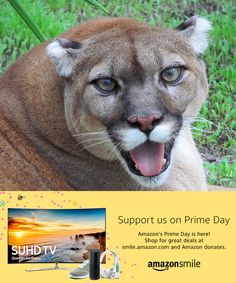 When you #StartWithaSmile on #PrimeDay, Amazon donates to Big Cat Rescue. Shop for great deals at smile.amazon.com/ch/59-3330495