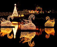 These three beautiful swans floated around the pond on individual rafts. These are part of the Christmas lights at Bellingrath Gardens in Mobile, Alabama. Best Christmas Lights, Hanging Christmas Lights, Christmas Light Displays, Xmas Lights, Holiday Lights, Christmas Love, Outdoor Christmas, Beautiful Christmas, All Things Christmas
