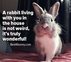 House rabbits are wonderful! www.best4bunny.com