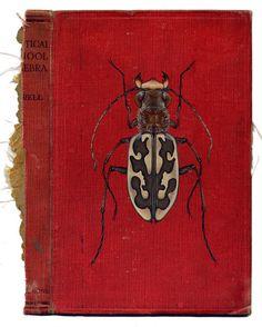 bugs painted on vintage books