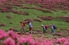 Trekking Val di Pejo www.visitvaldipejo.it