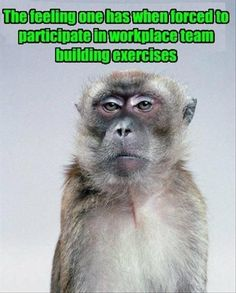This made me laugh. Poor monkey.