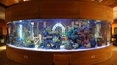 A fish tank aquarium is not only beautiful, but it is fairly easy to maintain. Many people have fish tanks … Aquarium Terrarium, Glass Aquarium, Aquarium Design, Marine Aquarium, Saltwater Fish Tanks, Saltwater Aquarium, Aquarium Fish Tank, Freshwater Aquarium, Reef Aquarium