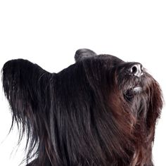 Skye Terrier, Terriers, Lion Sculpture, Statue, Art, Art Background, Kunst, Terrier, Gcse Art
