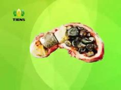 Pelangsing Double Cellulose Tiens Healthy Detox   YouTube