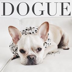 12 French Bulldogs You Need To Be Following On Instagram - thank you Auntie @Kimberly Baker for the recommendation!