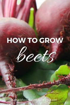 Easy Garden Landscaping Growing beets in your garden can give you access to the many beautiful, tasty varieties of heirloom and specialty beets that you just can't get from the grocery store. Here's how to grow beets organically. Organic Vegetables, Growing Vegetables, Root Vegetables, Organic Gardening Tips, Vegetable Gardening, Container Gardening, Kitchen Gardening, Flower Gardening, Organic Horticulture