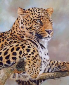 wildlife art                                                                                                                                                                                 More