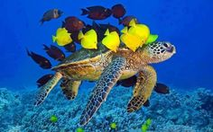 Amazing underwater beauty