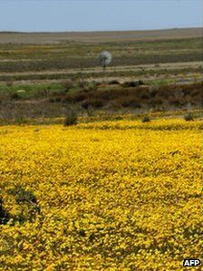 Beauty of the Karoo in S.A. to be ruined by controversial fracking technique?  Will benefits of jobs out way costs of damage done to environment?