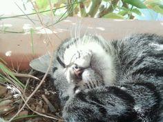 La mia piccola Tigre <3